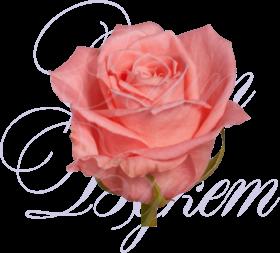 Уральская роза «Анна Карина»