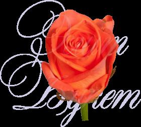 Уральская роза «Вау»