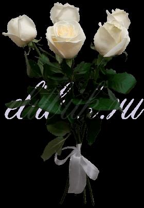 «Аваланш 5»