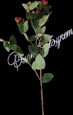 Гиперикум