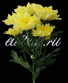 Хризантема «Балтика желтая»