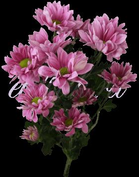 Хризантема «Гранд пинк»