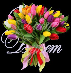 «Пан тюльпан»