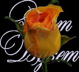 Роза Кения оранжевая 40 см