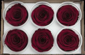 Стабилизированный цветок - Бардовая роза