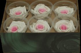 Стабилизированный цветок - Белая с красным роза