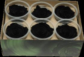 Стабилизированный цветок - Черная роза