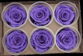 Стабилизированный цветок - Фиолетовая роза