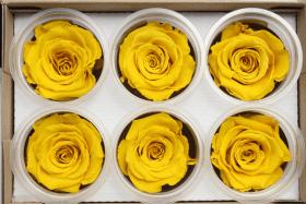Стабилизированный цветок - Желтая роза