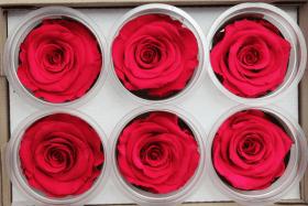Стабилизированный цветок - Красная роза