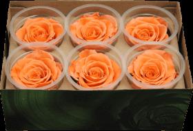 Стабилизированный цветок - Оранжевая роза