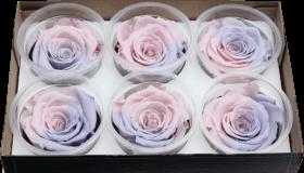Стабилизированный цветок - Пастельно-розовая роза