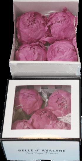 Стабилизированный цветок - роза цвета фанданго