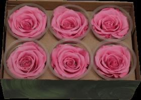 Стабилизированный цветок - Розовая роза