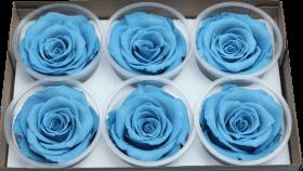 Стабилизированный цветок - Синяя роза