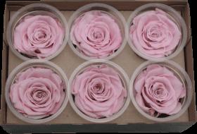 Стабилизированный цветок - Светло-розовая роза