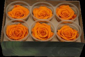 Стабилизированный цветок - Темно-оранжевая роза