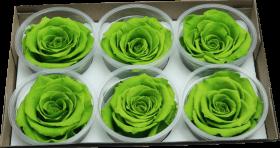 Стабилизированный цветок - Зеленая роза