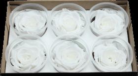Стабилизированный цветок - Белая роза