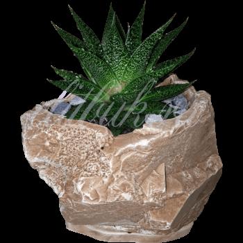 Алоэ в керамическом кашпо