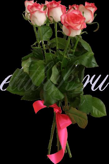 «Джумилия 7»