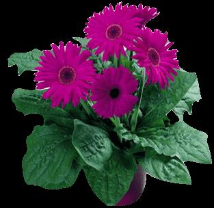 Екатеринбург комнатные цветы купить
