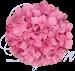 Гортензия малиновая