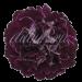 Гвоздика «Minerva Black»