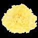 Гвоздика «Yellow»