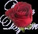 Роза Кения красная 40 см